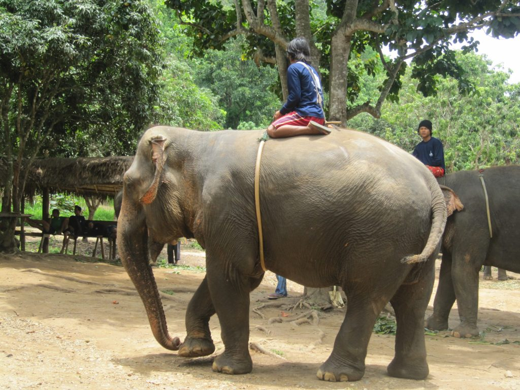 Deze afbeelding heeft een leeg alt-attribuut; de bestandsnaam is IMG_3217-olifanten-2-1024x768.jpg