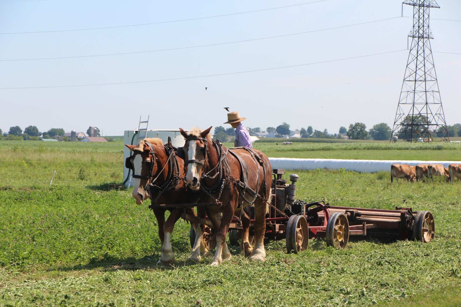 dutch country amish pennsylvania roadtrip amerika vs usa lancaster